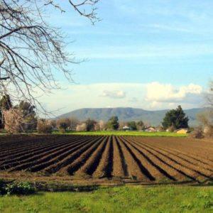 Poljoprivredni Proizvođači Spremni Za Nove Medije I Inovacije U Marketingu